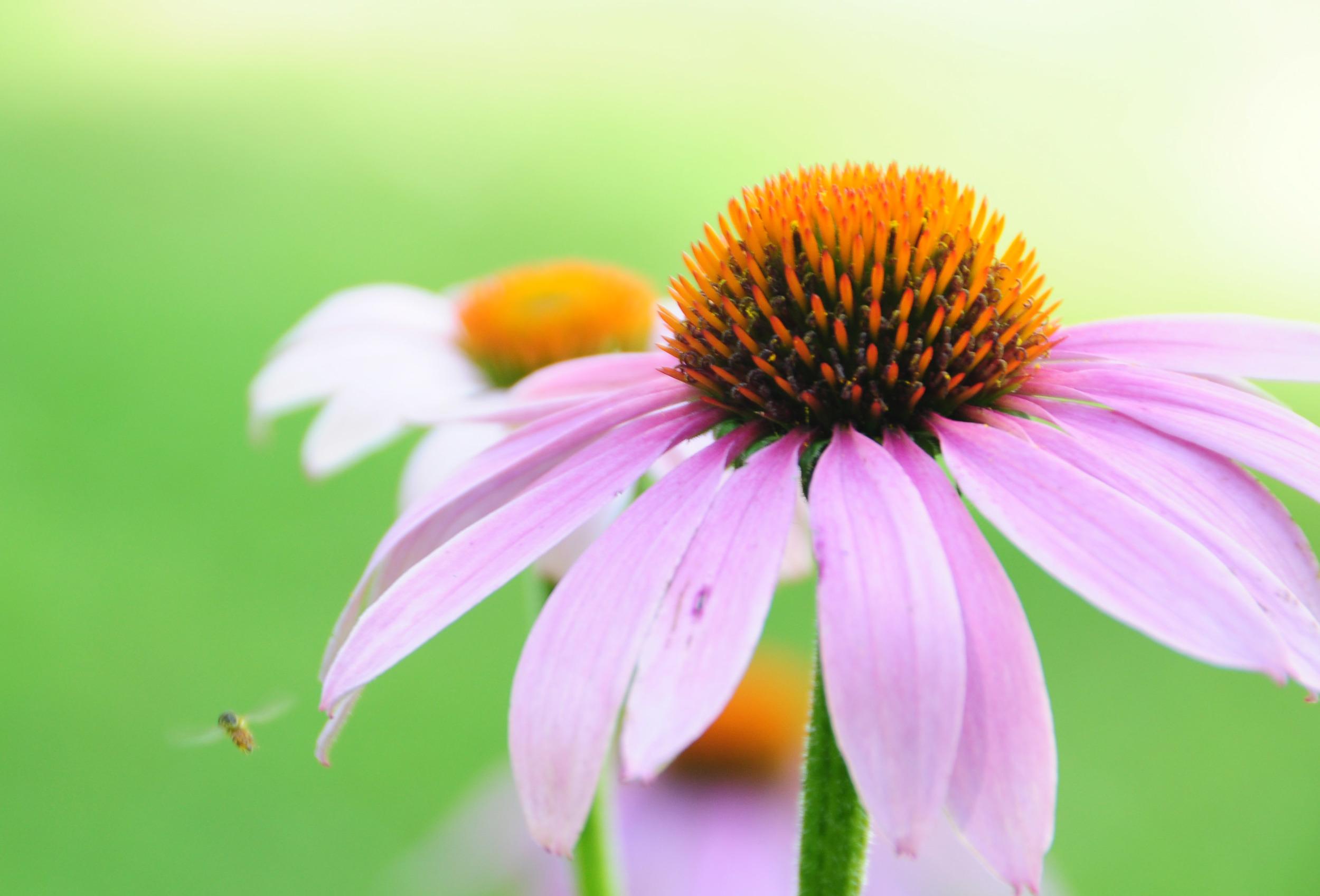 flowerbug2.jpg
