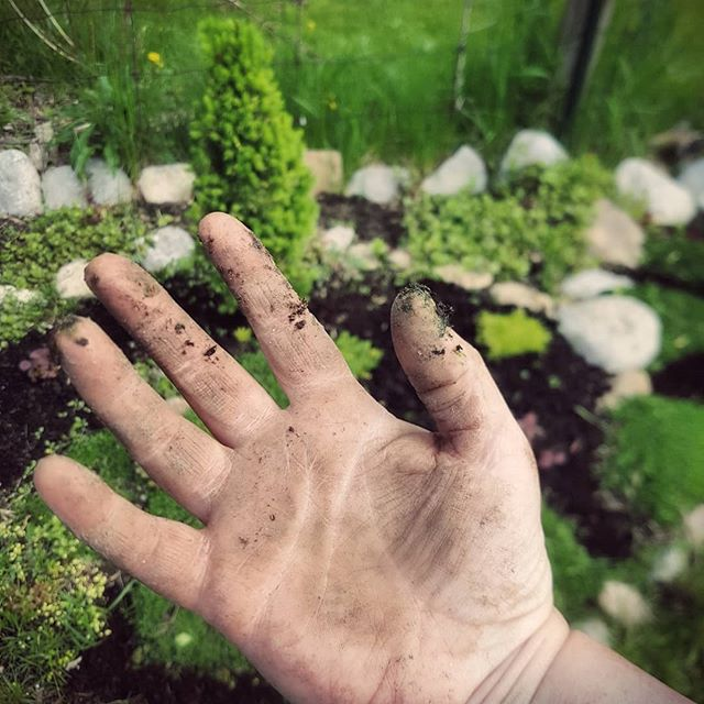 When you can't find your gloves. #gardening #plants #planting #spring #dirtyhands #cleansoul