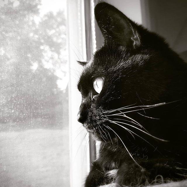 This face in the sun. #blackcat #catsofinstagram #mybuddy #furball