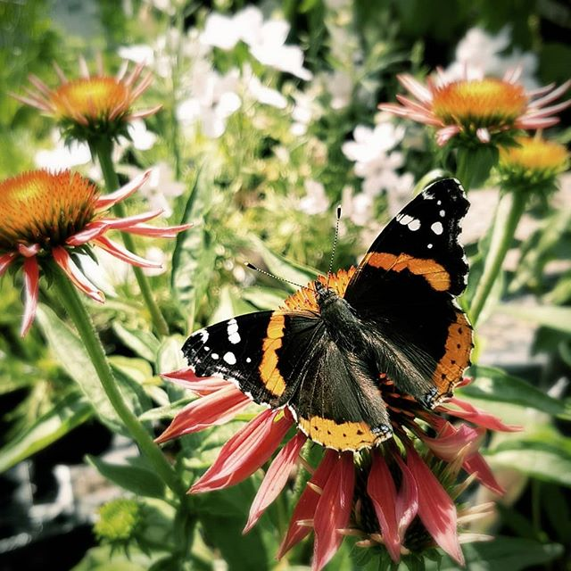 Another colourful friend from work. #flowers #butterflies #colourful #pollen #nature