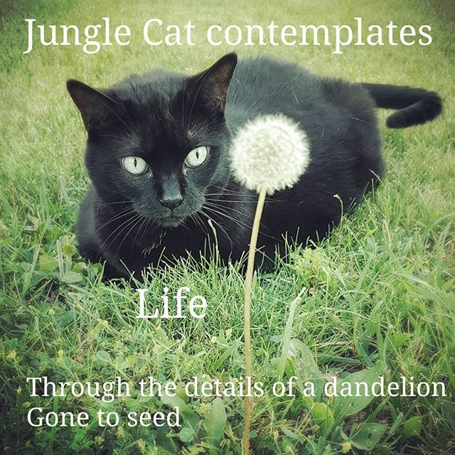 #catsofinstagram #blackcat #contemplative #themeaningoflife