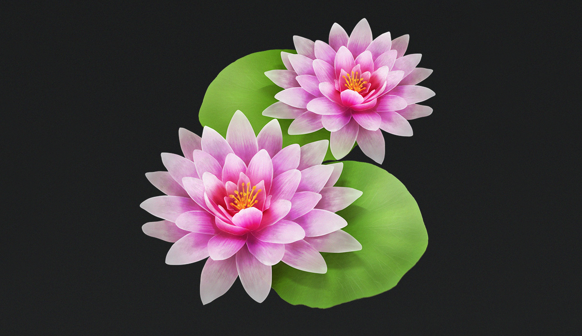 Rusic's lotus flower.