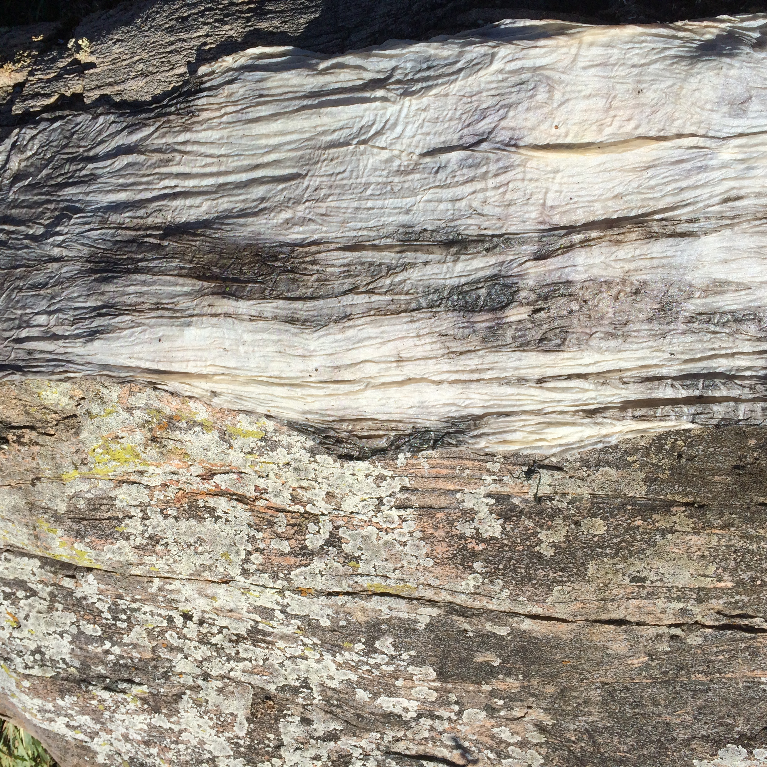 Gneiss Outcrops
