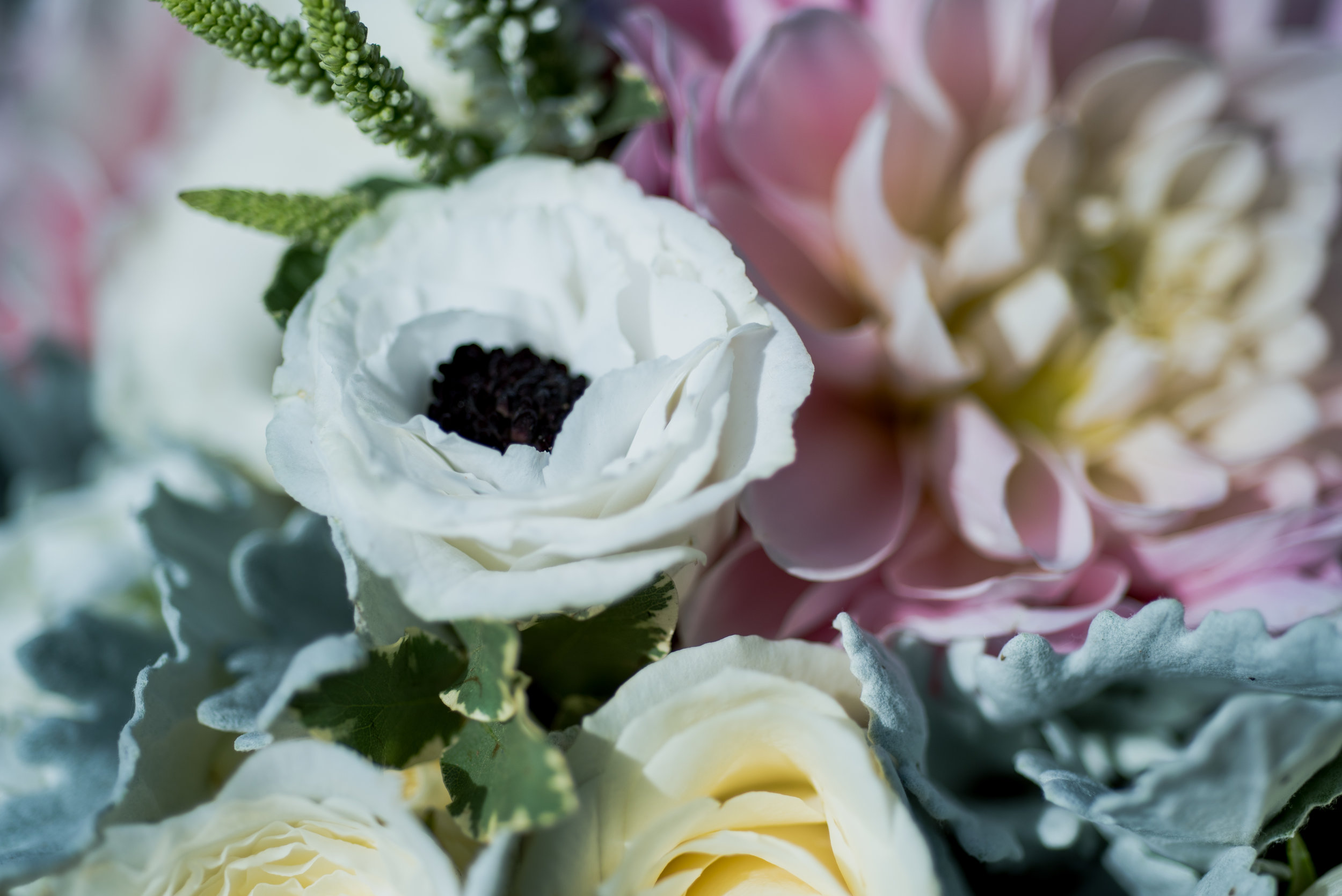 sequim-petrichor photo-elopement-desitination-pacific northwest-cross country-florist-washington-sublime stems-54.jpg