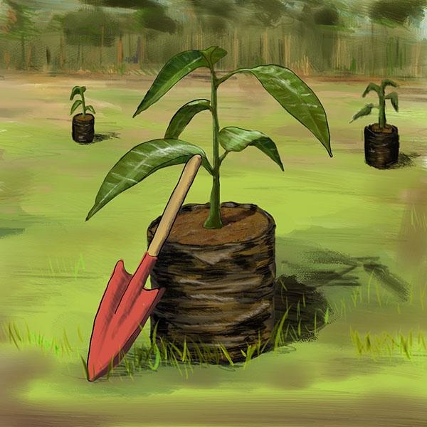 reforestation-afforestation-Square-Large-Colour.jpg