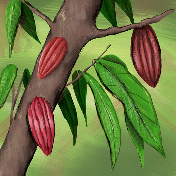 Perennial-crop-Square-Large-Colour.jpg