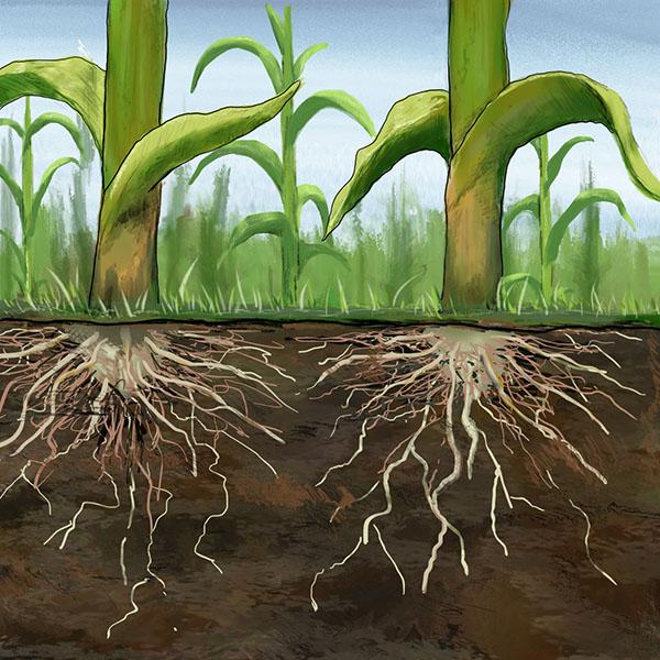 Soil-Management-icon-Square-Large-Colour.jpg