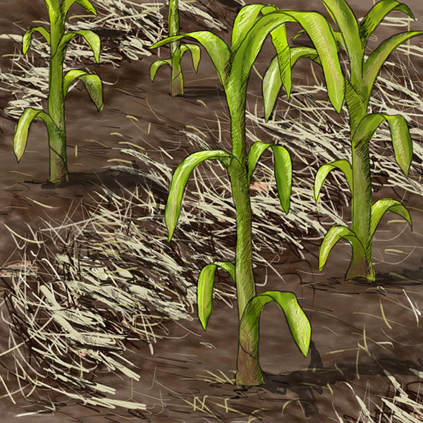 Tillage-Biomass-icon-Square-Large-Colour.jpg