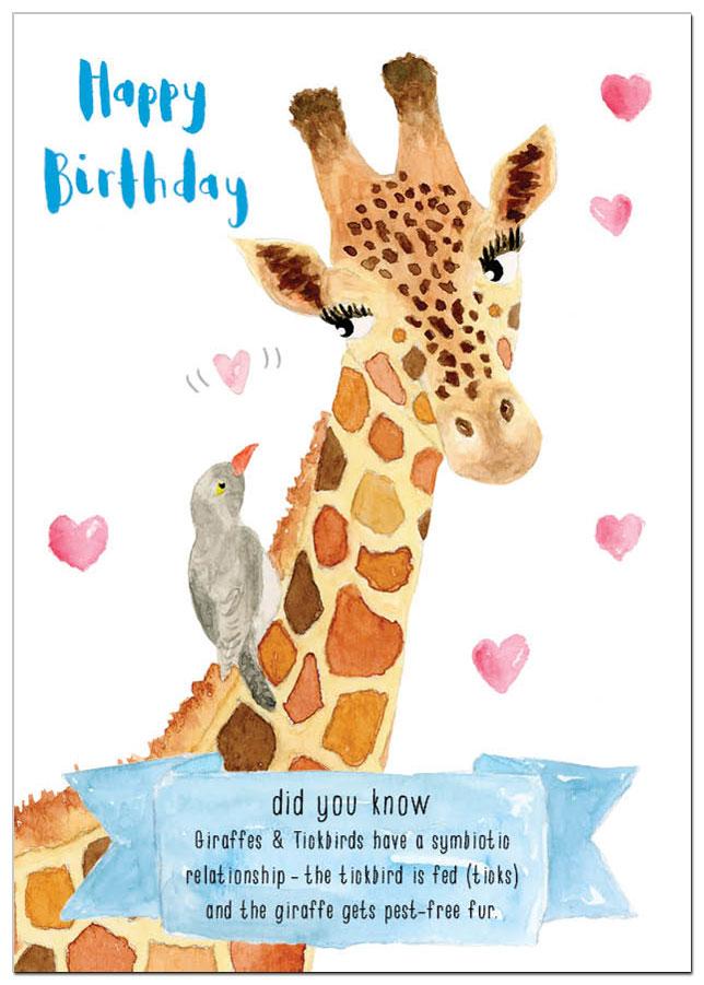 AM_giraffes.jpg