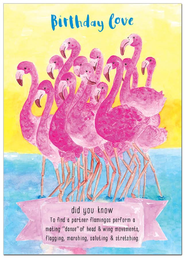 AM_flamingos.jpg