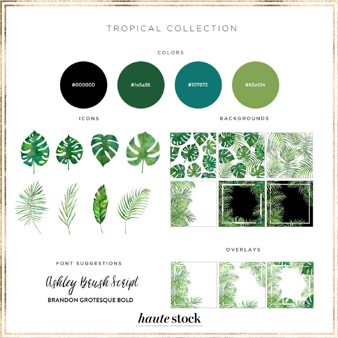 Haute-Stocks-Tropical-Collection-Graphics-Packs.png