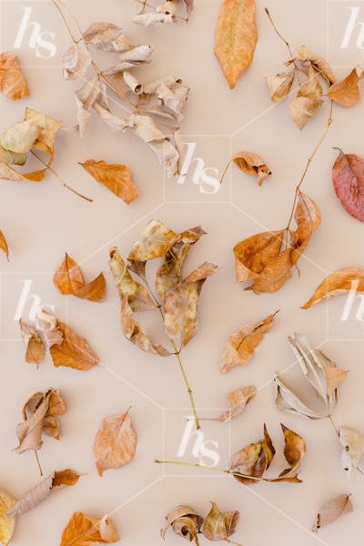 haute-stock-photography-falling-leaves-final-17.jpg