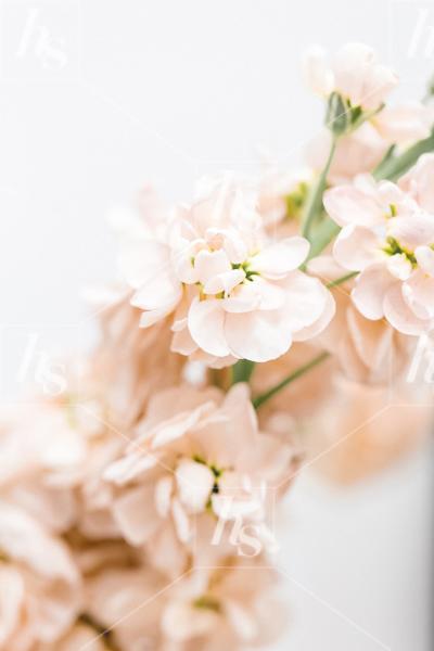 haute-stock-photography-peachy-13.jpg