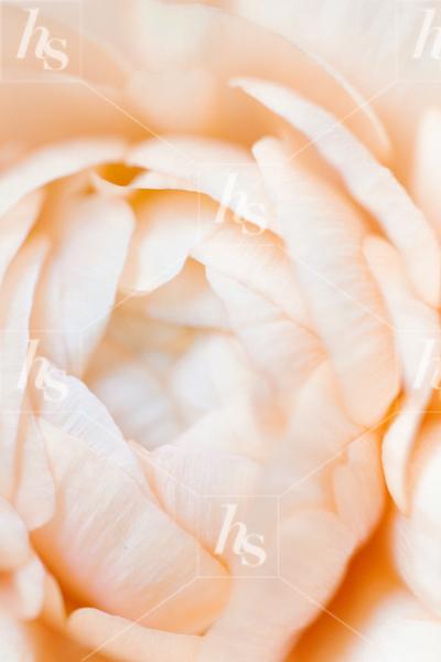 haute-stock-photography-peachy-21.jpg