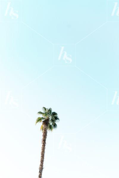 haute-stock-photography-palm-springs-collection-final-1.jpg