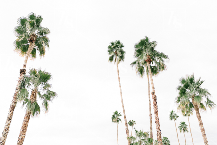 haute-stock-photography-palm-springs-collection-final-9.jpg