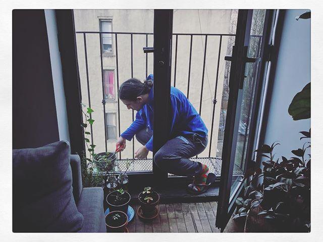 Urban Gardener. 🌱🍓🏙 @migool16000