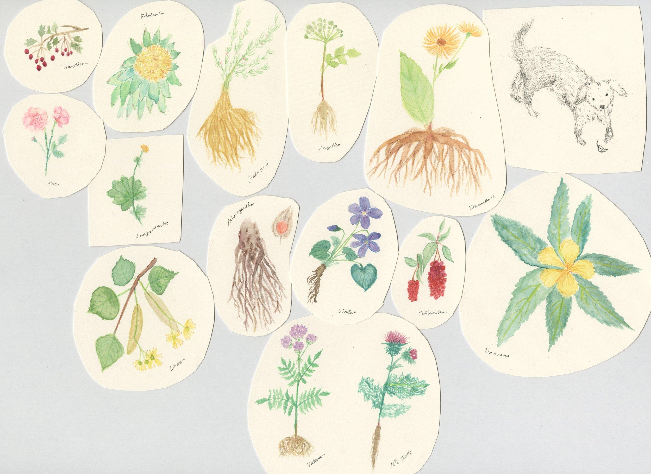 Plants011.jpg