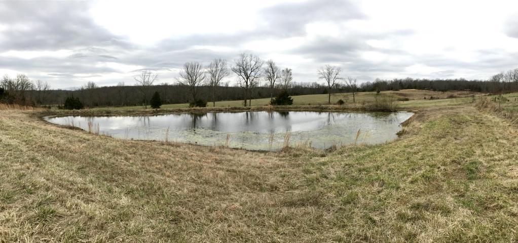 pond area.jpg