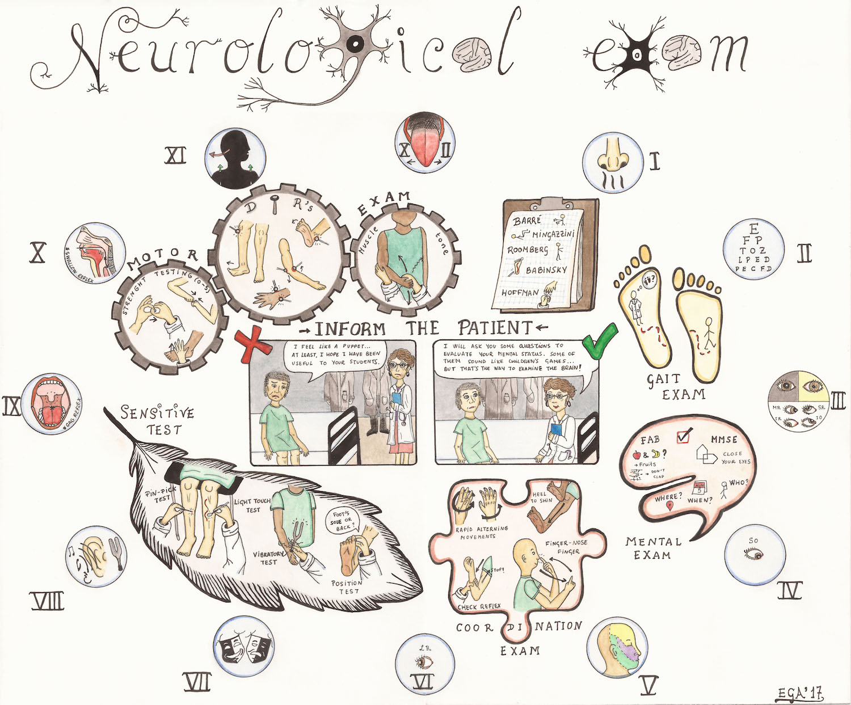 Neurological Exam  by Eugenia G. Amor.  Fall 2017 Intima