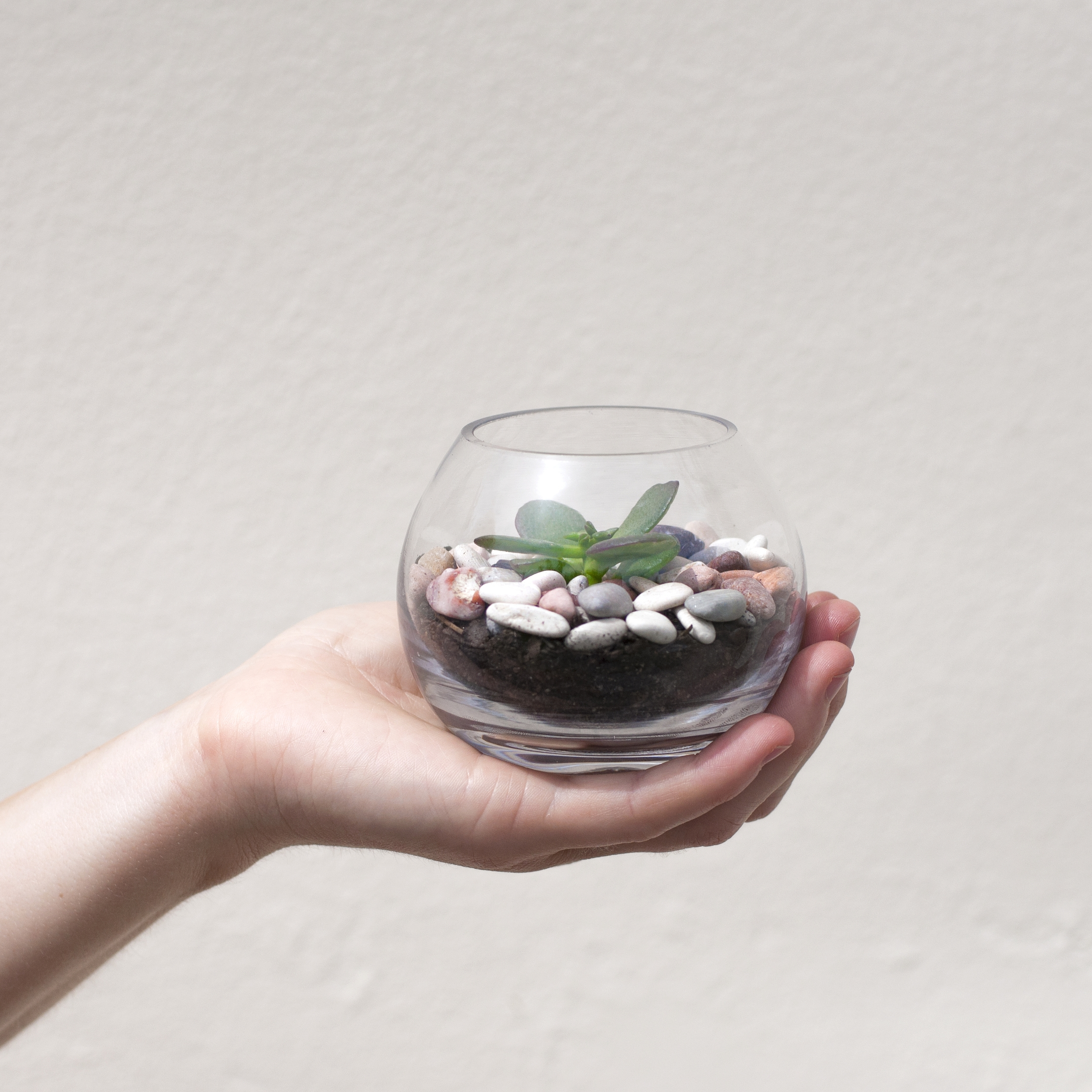 DO ME A FAVOUR  These tiny terrariums make simple yet stylish wedding favours. They can be customised to your wedding theme or just as they come. Not only do they make the table look lovely, your guests can take them home too. Everyone's a winner!  They measure approx 5-6cm wide and 4cms tall.  $8