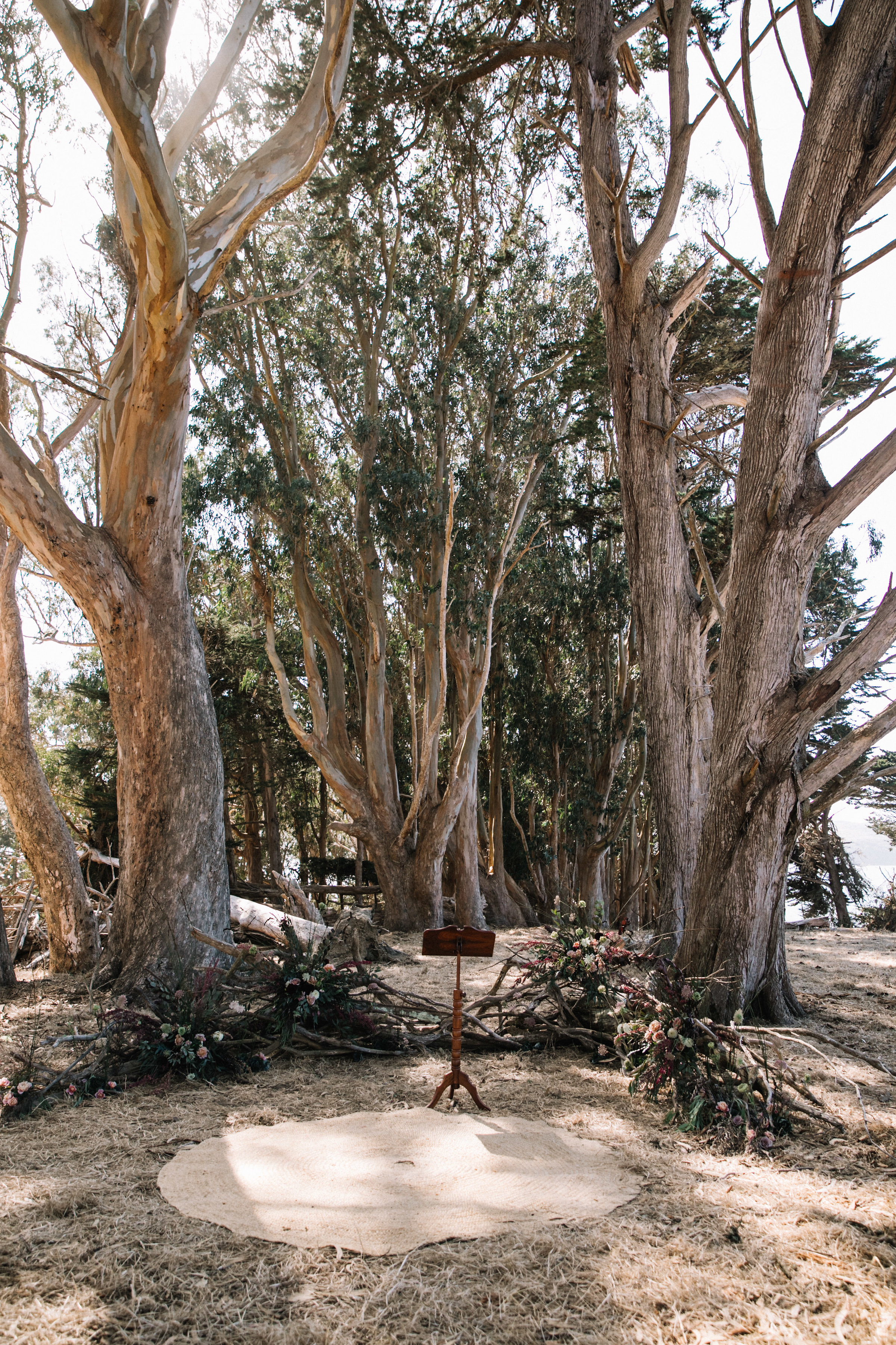 Semi-circle ceremony backdrop set in the Straus Home Ranch Eucalyptus grove by Venn Floral photographed by Lucille Lawrence.