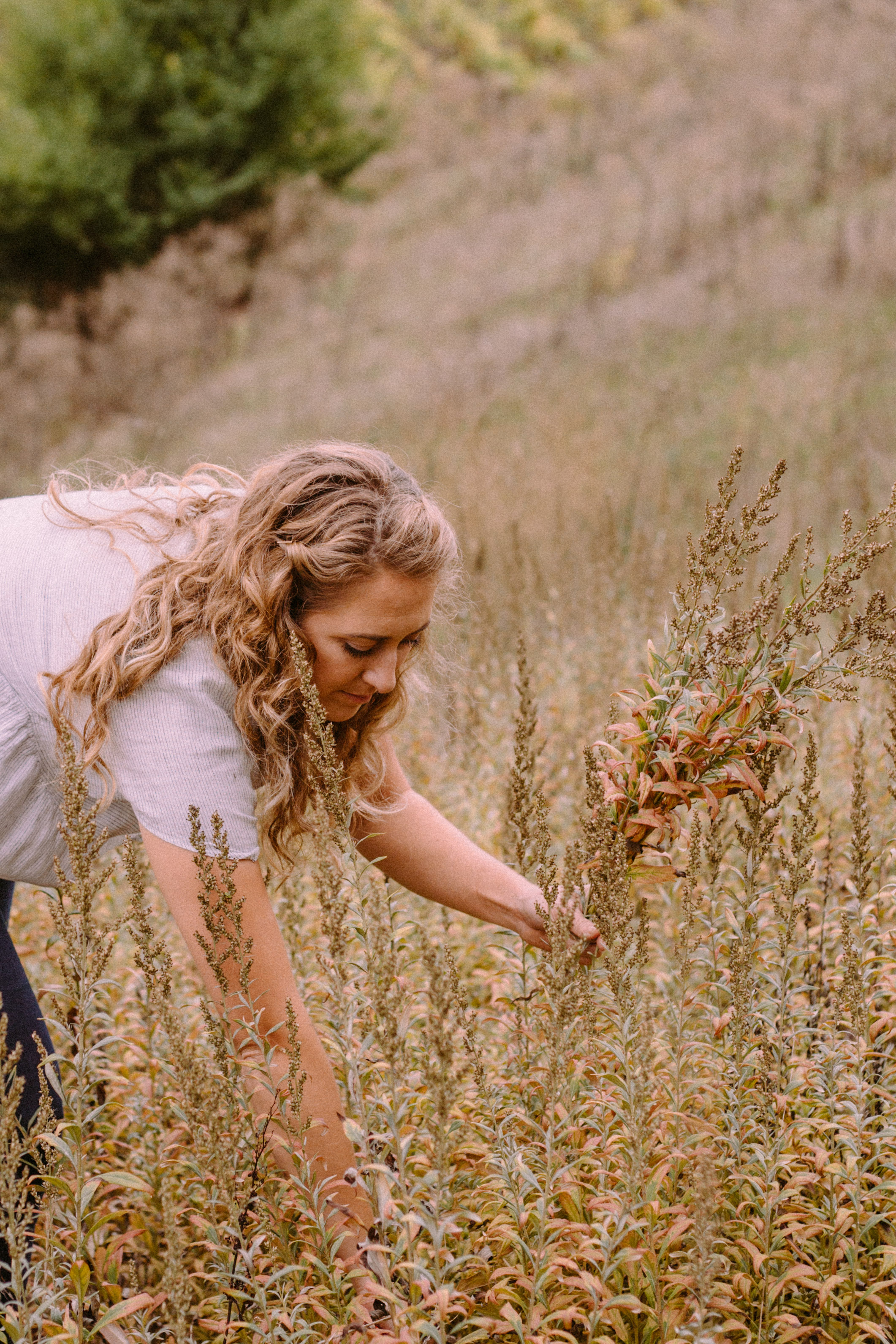 Camille out foraging on her family's farm for delicate, golden seed heads for Venn Floral's ethereal designs. Photographed by Collin Morrow.