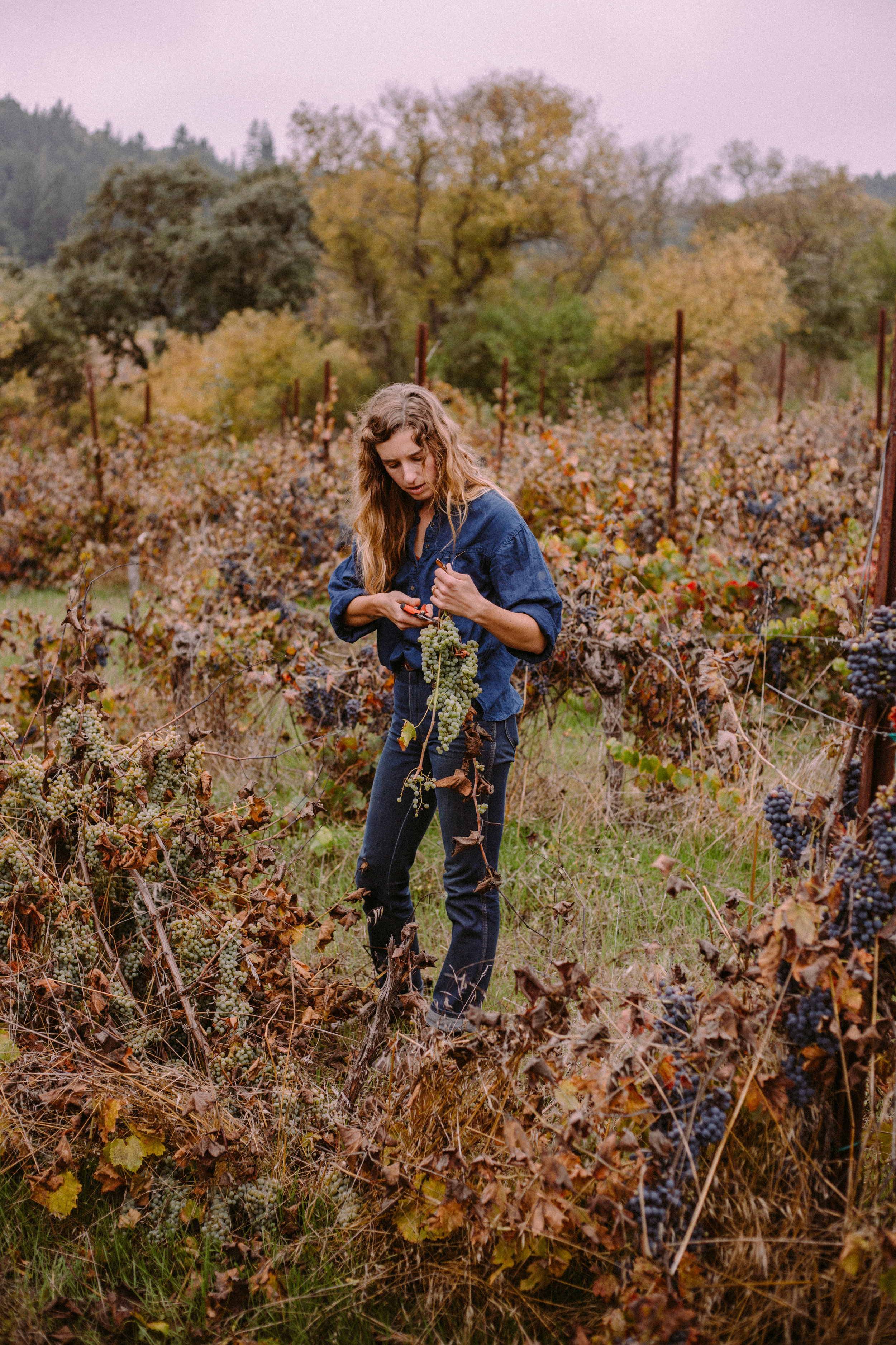 Heather trimming up grapes at Rowan Farm to use in lush table scape designs for Venn Floral. Photographed by Collin Morrow.