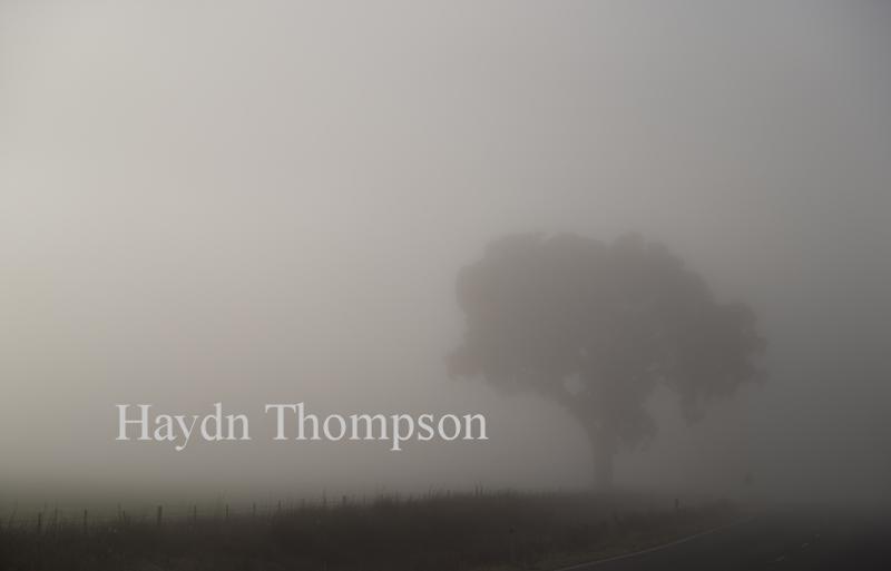 The Peaceful Road.jpg