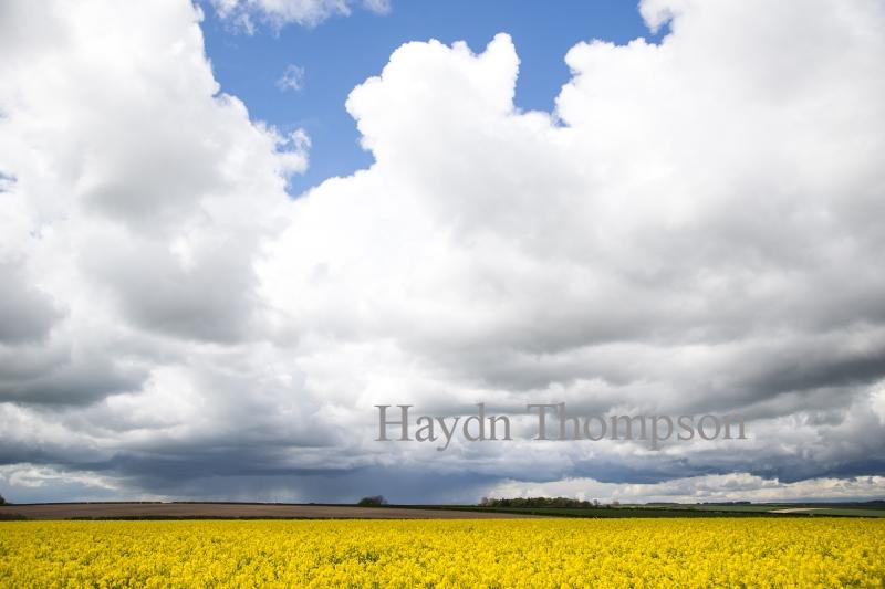 Linseed Yorkshire.jpg