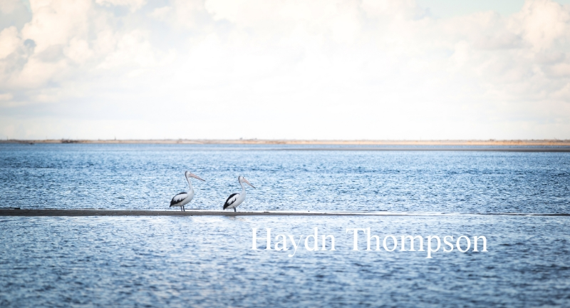 Pelicans at the Heads.jpg