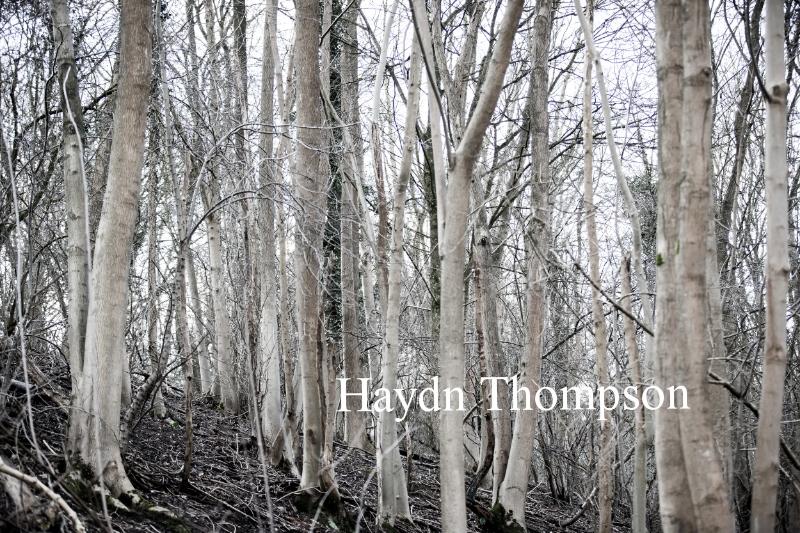 Cookham Woods.jpg