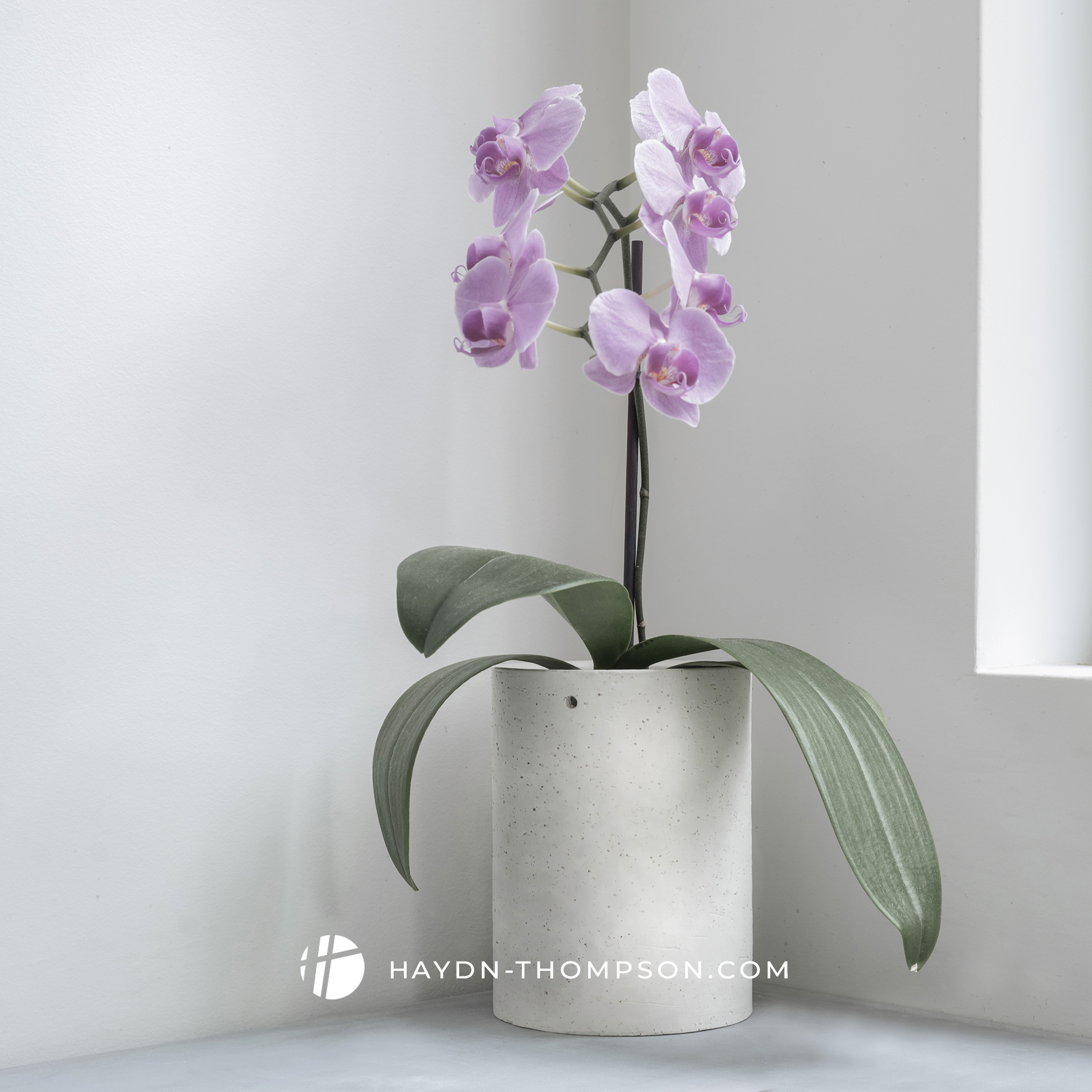 Planters - Orchid - On Kitchen Bench Corner (Small Size - Watermark).jpg
