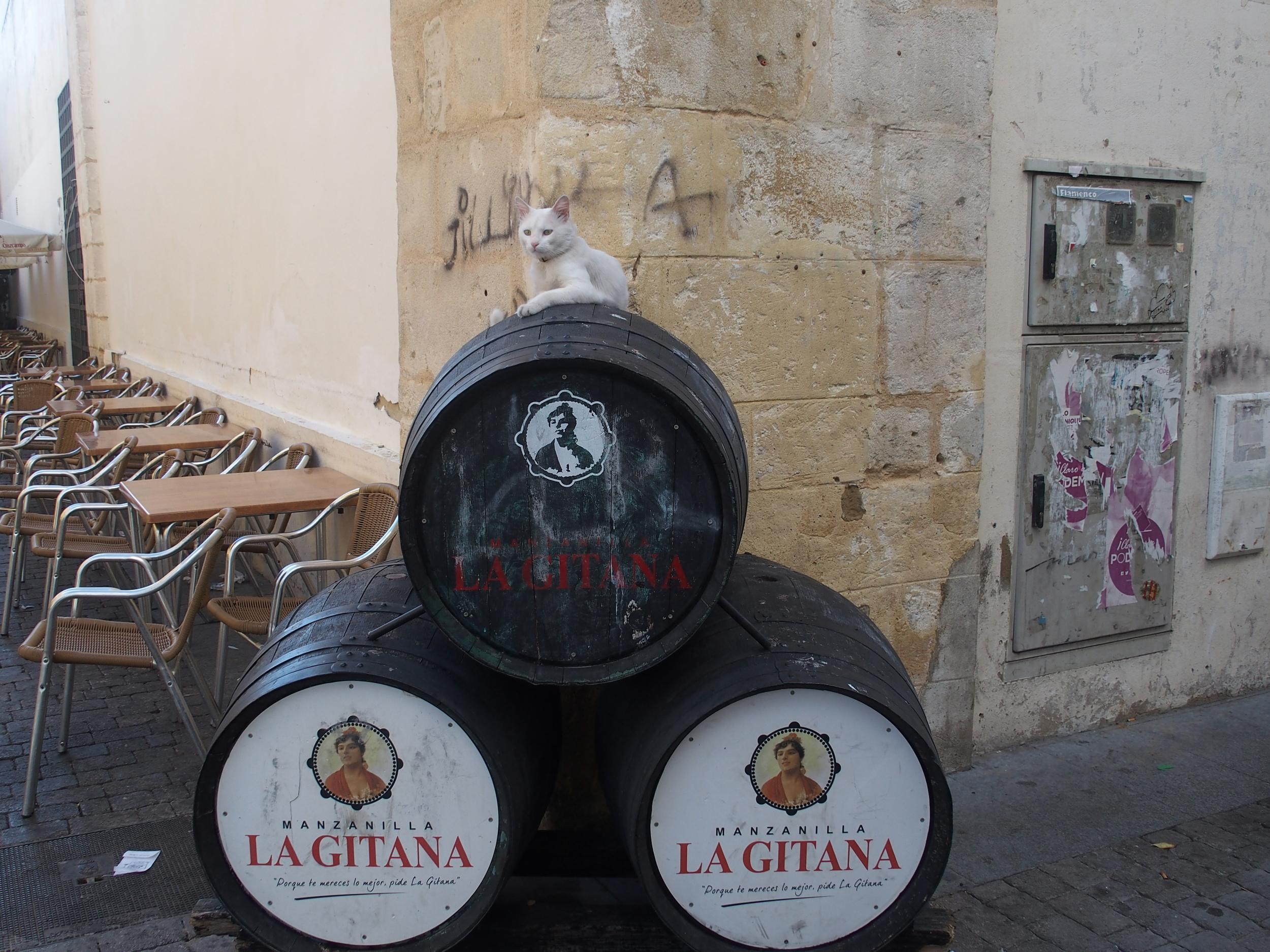 La Gitana Barrels with Cat.JPG