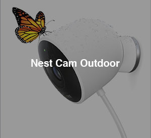 nestcam_butterfly_TOC.jpg