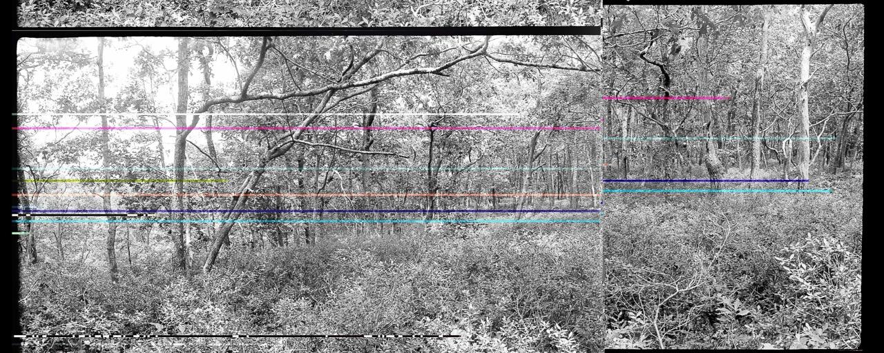 Tryforos_wellfleet woods1.21-22 colorflipbroken.jpeg