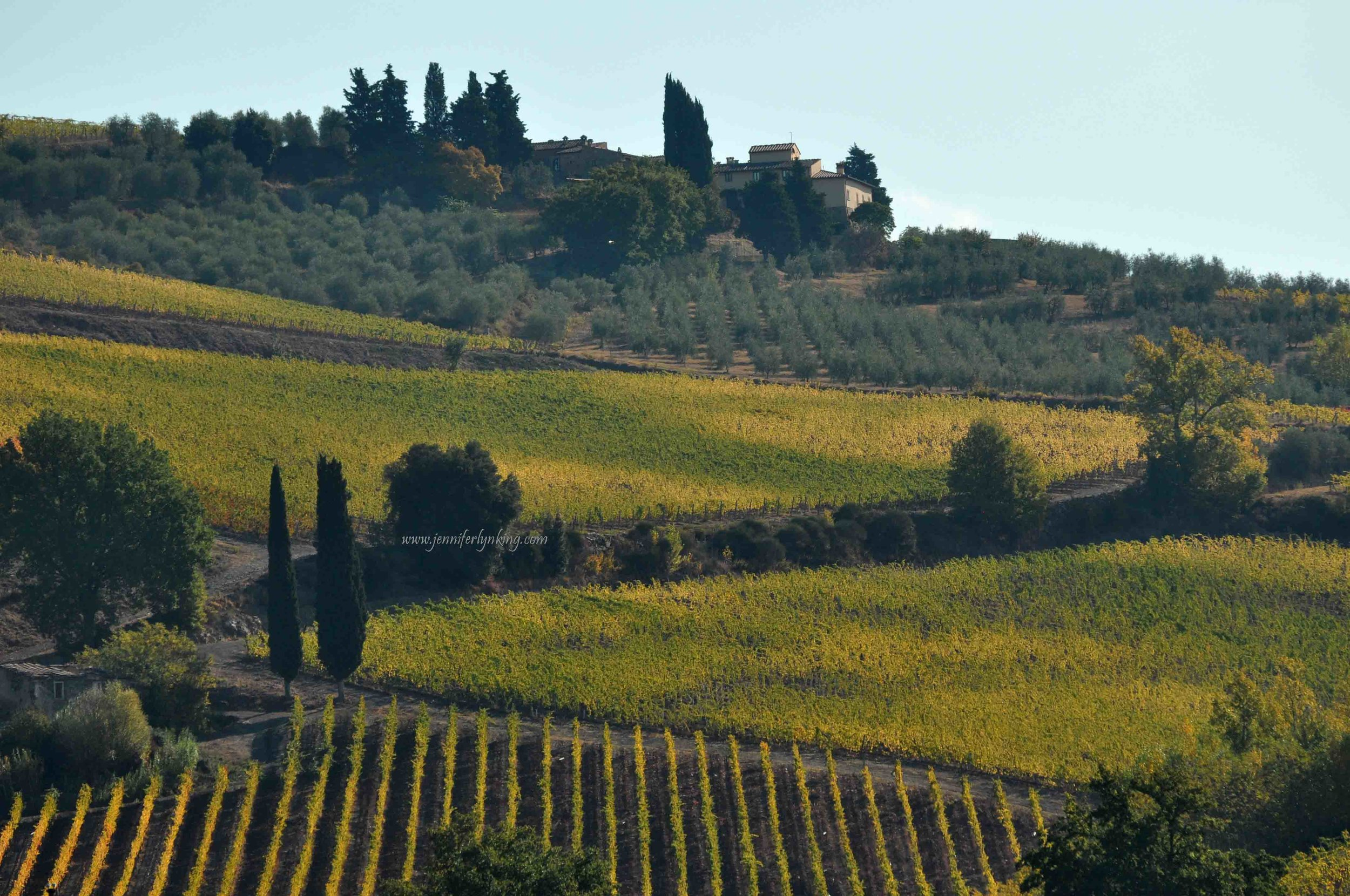 Italy7_Tuscany_102211_-339.jpg