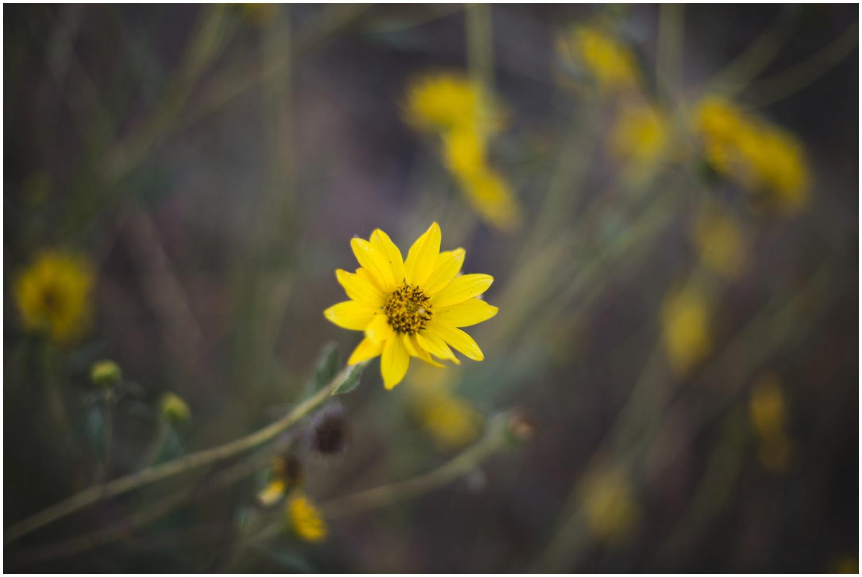 ©Taylor Powers_Shanna+Chris Engagement__0028.jpg