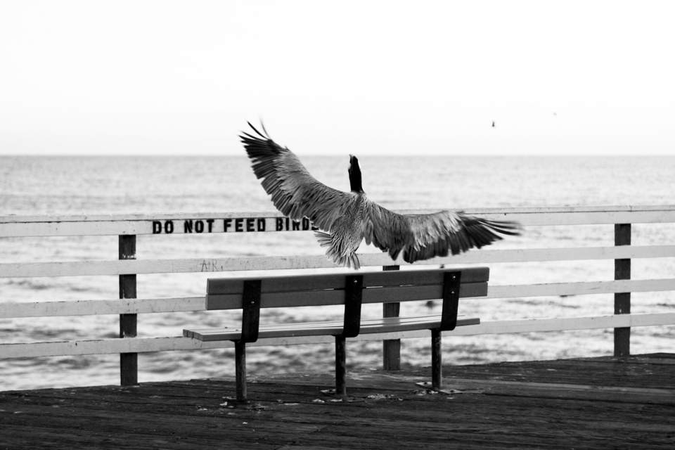 sophia-liu-photography-pismo-beach-5.jpg
