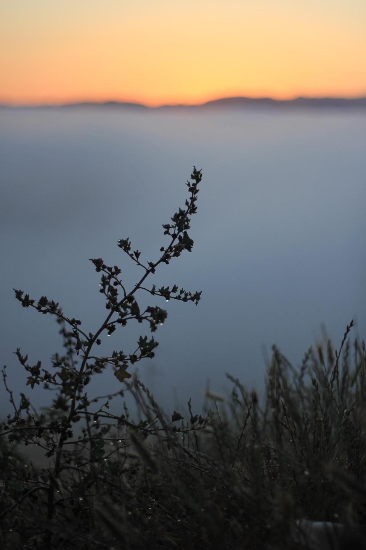 prefumo-sunrise-6.jpg