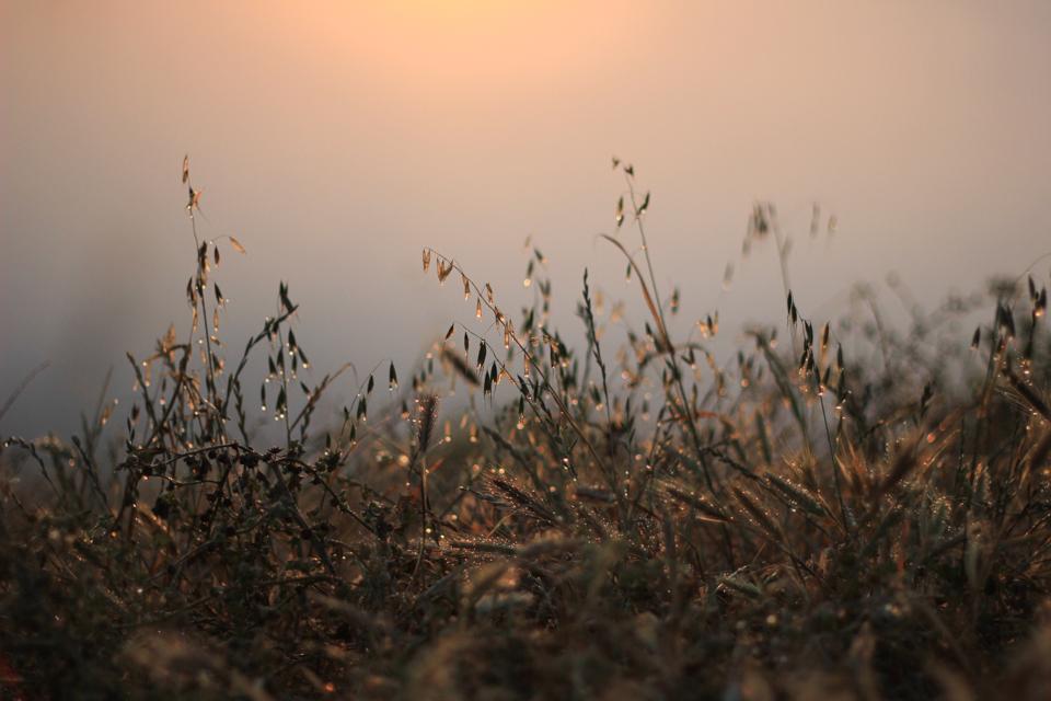 prefumo-sunrise-9.jpg