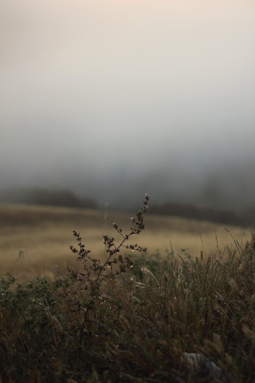 prefumo-sunrise-5.jpg