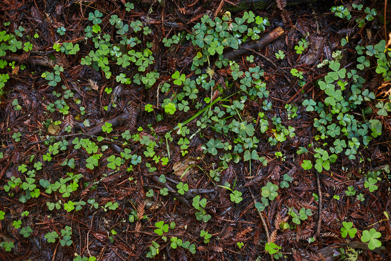 sophia-liu-photography-muir-woods-IMG_7929x1500.jpg