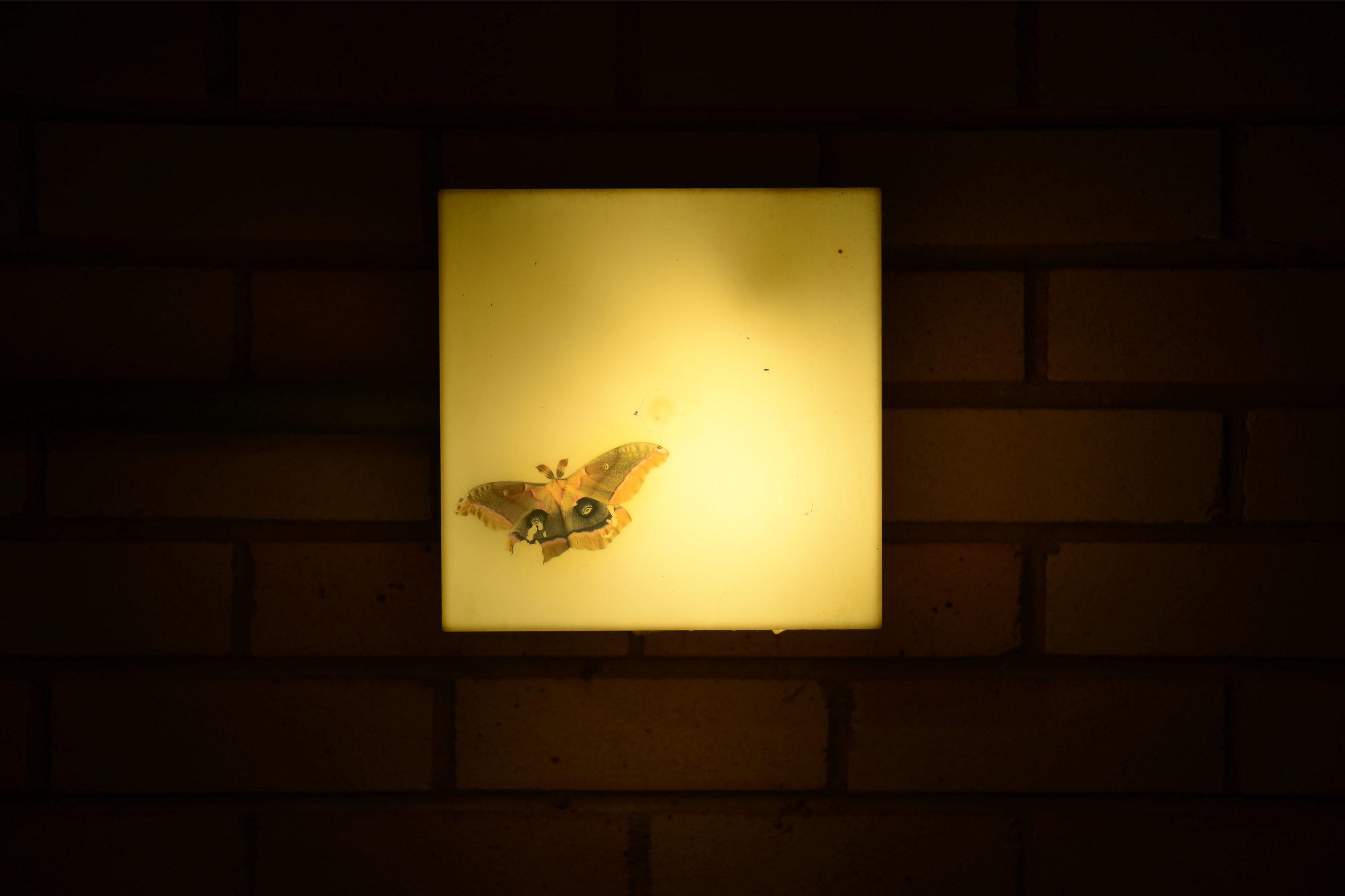 polyphemus_moth.jpg