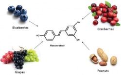 resveratrol.jpg