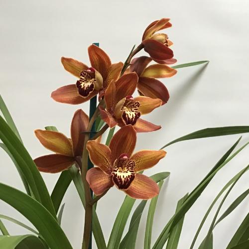 Orchid-500x500.jpg