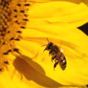 Bee-400x400.jpg