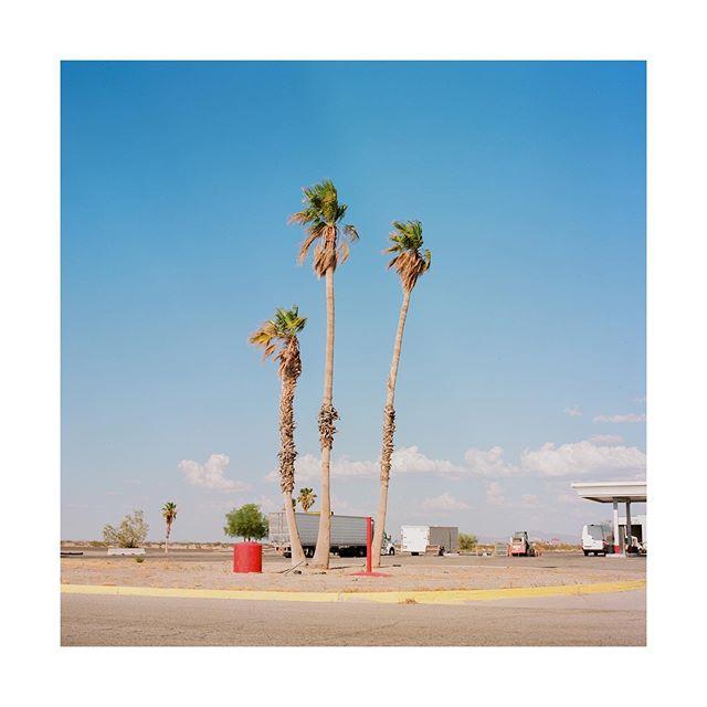 Rest Stop . . . . #blytheca #southerncalifornia  #desert #cactus #hasselblad500cm #ektar100 #kodak #hippomag  #gominimalmag  #somewheremagazine  #taintedmag #ishootfilm #imaginarymagnitude #paperjournalmag #burnmagazine #weltraumzine #oksfieldmag #surfer #dazedandexposed #mytinyatlas  #rentalmag  #anotherplacemagazine #minimalzine  #artwista_gallery #lensculture #film-photographic #millennium_images #palepalmcollection #photo_collective #rent