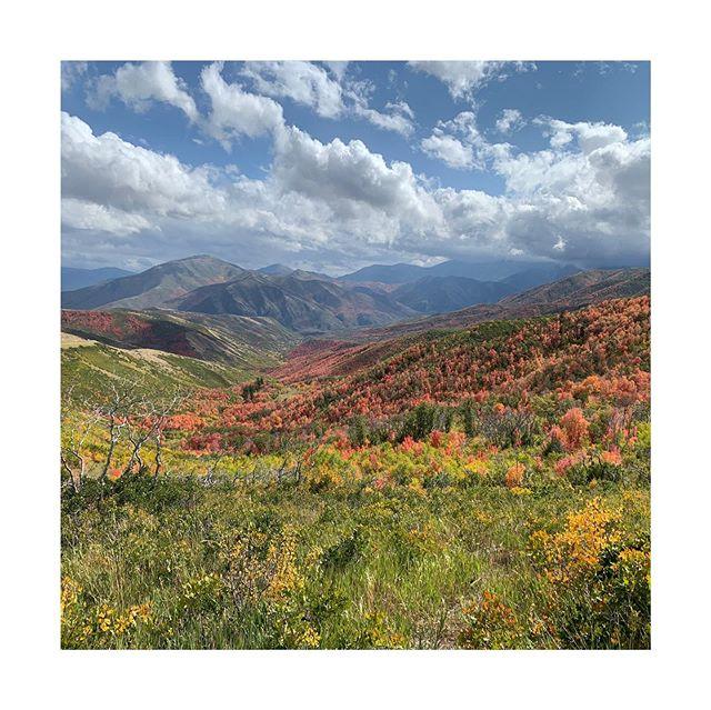 Uinta National Forest . . . #gominimalmag #utah #fallcolors #alpineloopscenicbyway #aspentrees #uintawasatchcachenationalforest #exploreobserveshare #imaginarymagnitude #fisheyelemag  #somewheremagazine #naturalutah #minimalist#paperjournalmag #burnmagazine #myfeatureshoot #weltraumzine #oksfieldmag #dazedandexposed #mytinyatlas  #rentalmag  #anotherplacemagazine #minimalzine @somewheremagazine #artwista_gallery #ignant #lensculture #filmphotographic #palepalmcollection #photo_collective #rentalmag