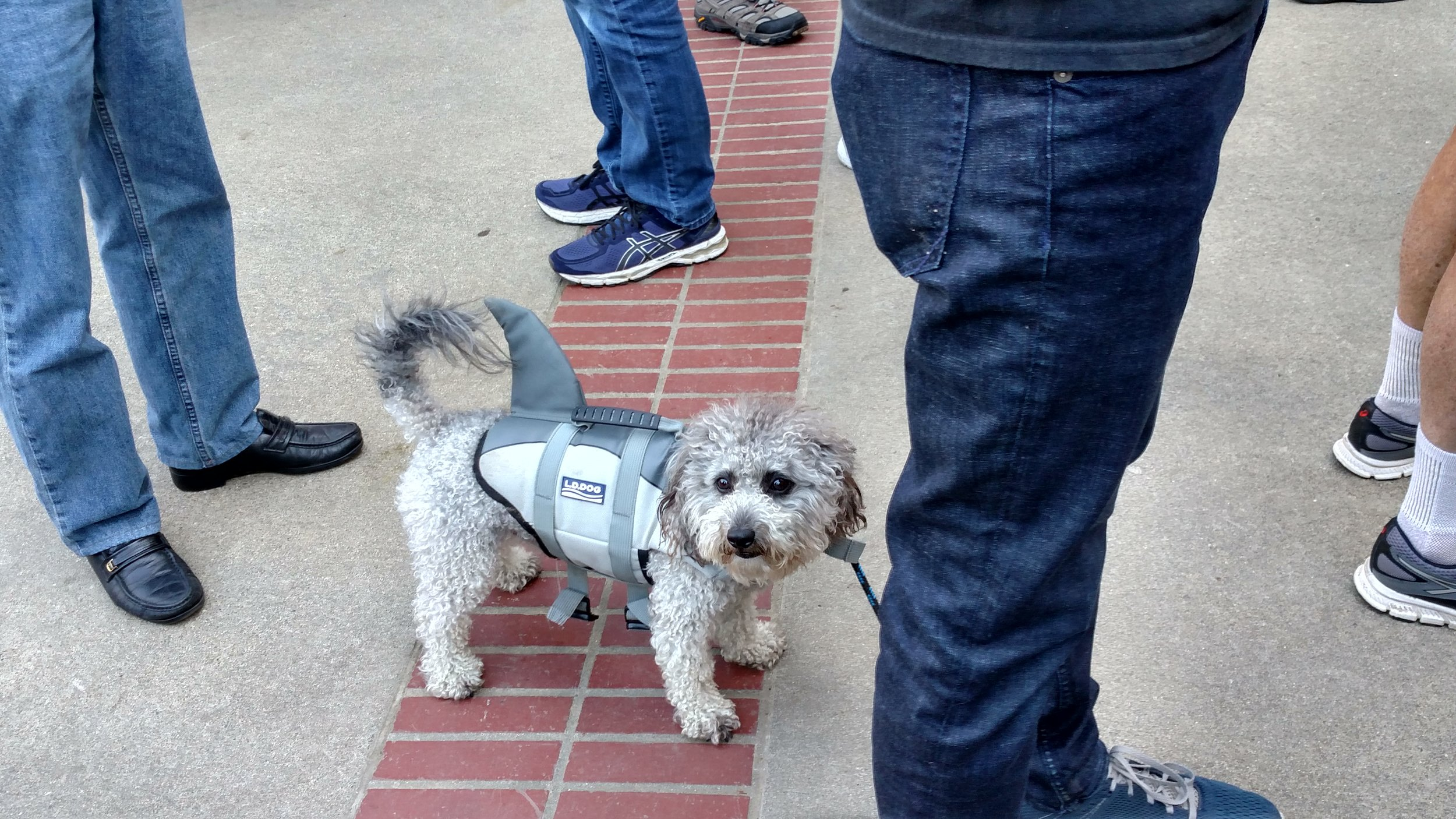 Even family pets got involved in the demonstrations, including this shark/dog.